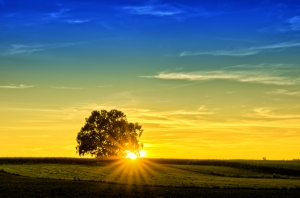 Sunset - single Tree  by Krappweis