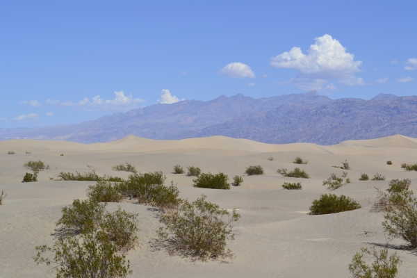 Death Valley - Dunes de sable - La Parisienne Trotteuse